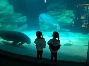The Aquarium was so beautiful